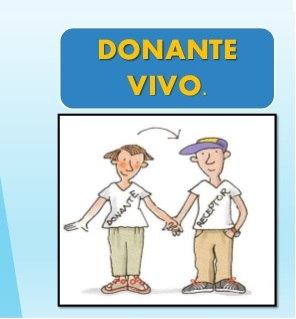 donante vivo